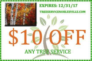 Tree Service Noblesville 317-537-9770