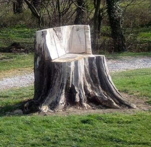Noblesville Stump Removal 317-537-9770