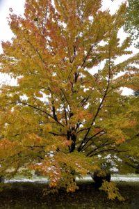 Noblesville Tree Service 317-537-9770