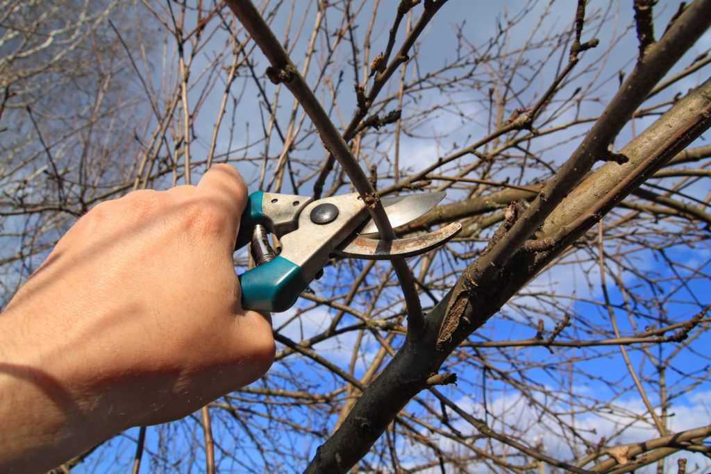 Noblesville Tree Pruning 317-537-9770