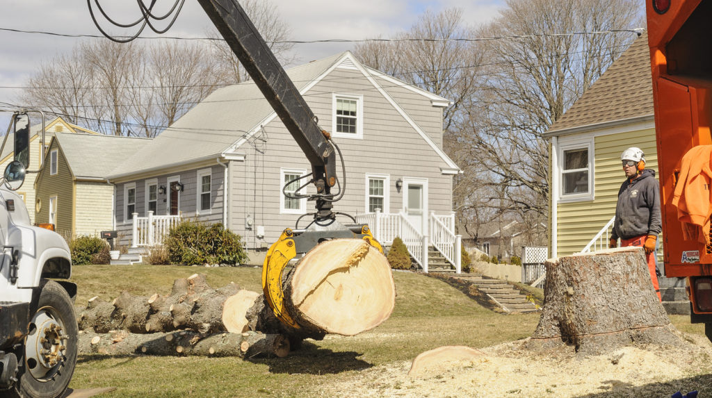 Noblesville Tree Removal 317-537-9770