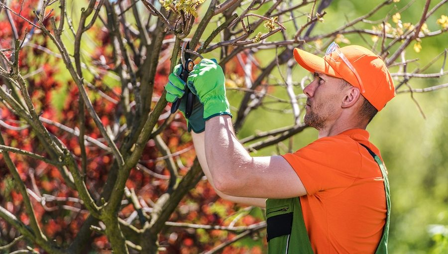 Noblesville Tree Service 317-537-9770Noblesville Tree Service 317-537-9770