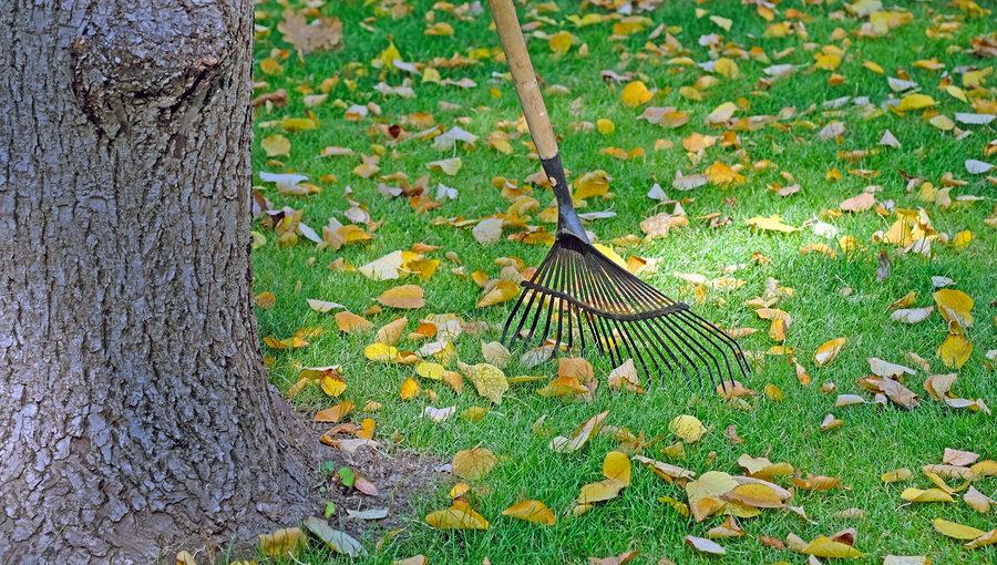 Noblesville Tree Service
