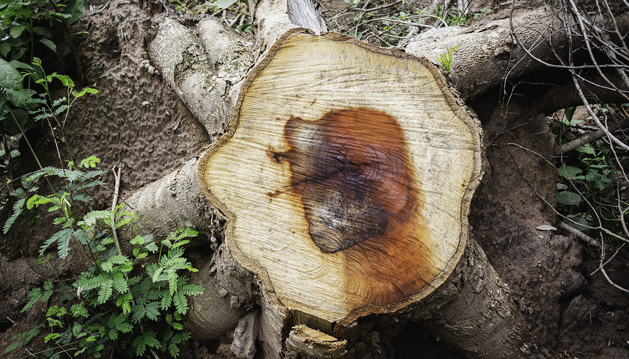 Noblesville Stump Removal 317-537-9770